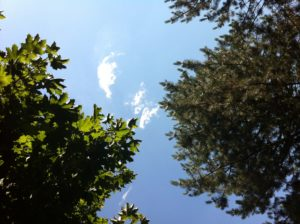 trees & clouds